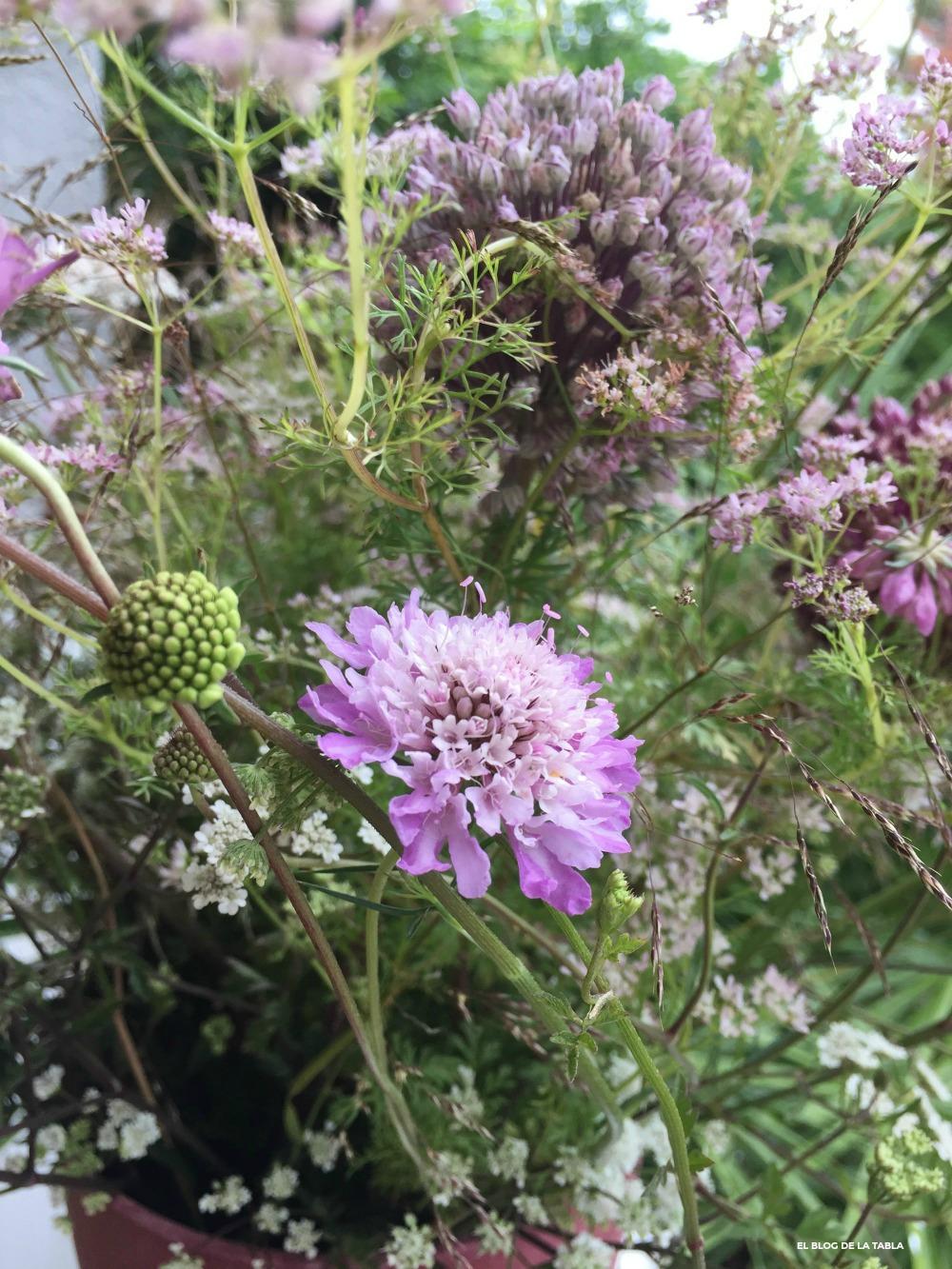 flores de escabiosa silvestre en un arreglo floral