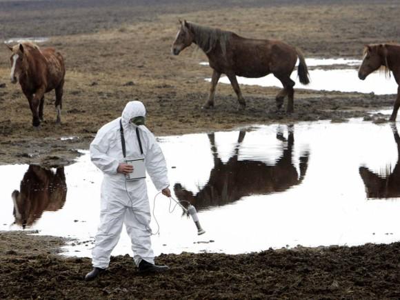 珍しい!モンゴルに生息する野生の馬、モウコノウマ【n】 チェルノブイリで繁殖?