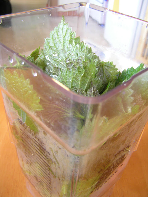 raw nettles green smoothie