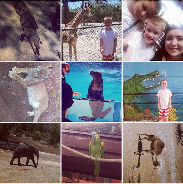 Fuerteventura Zoo - Oasis Park