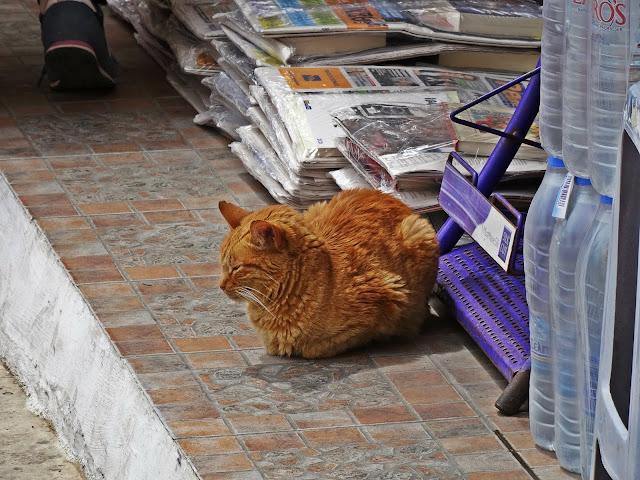 koty Grecja