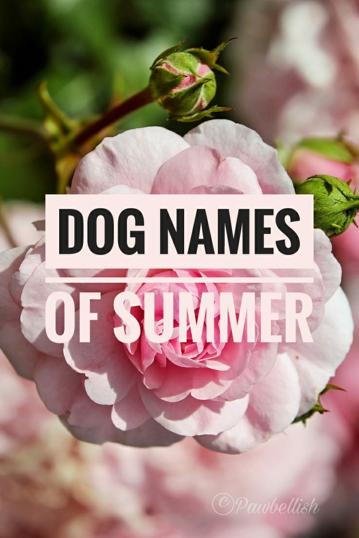 Best Dog Names of Summer