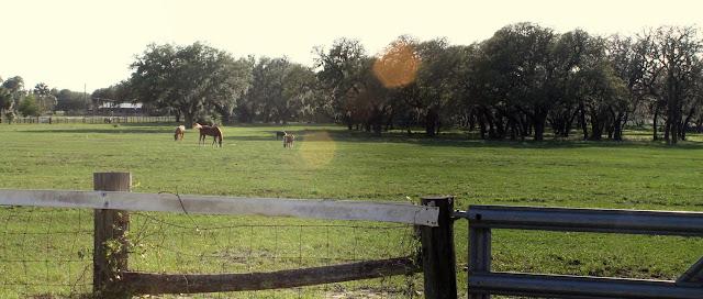 Algunos ranchos con ganado