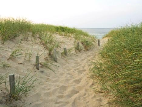 green dune grass