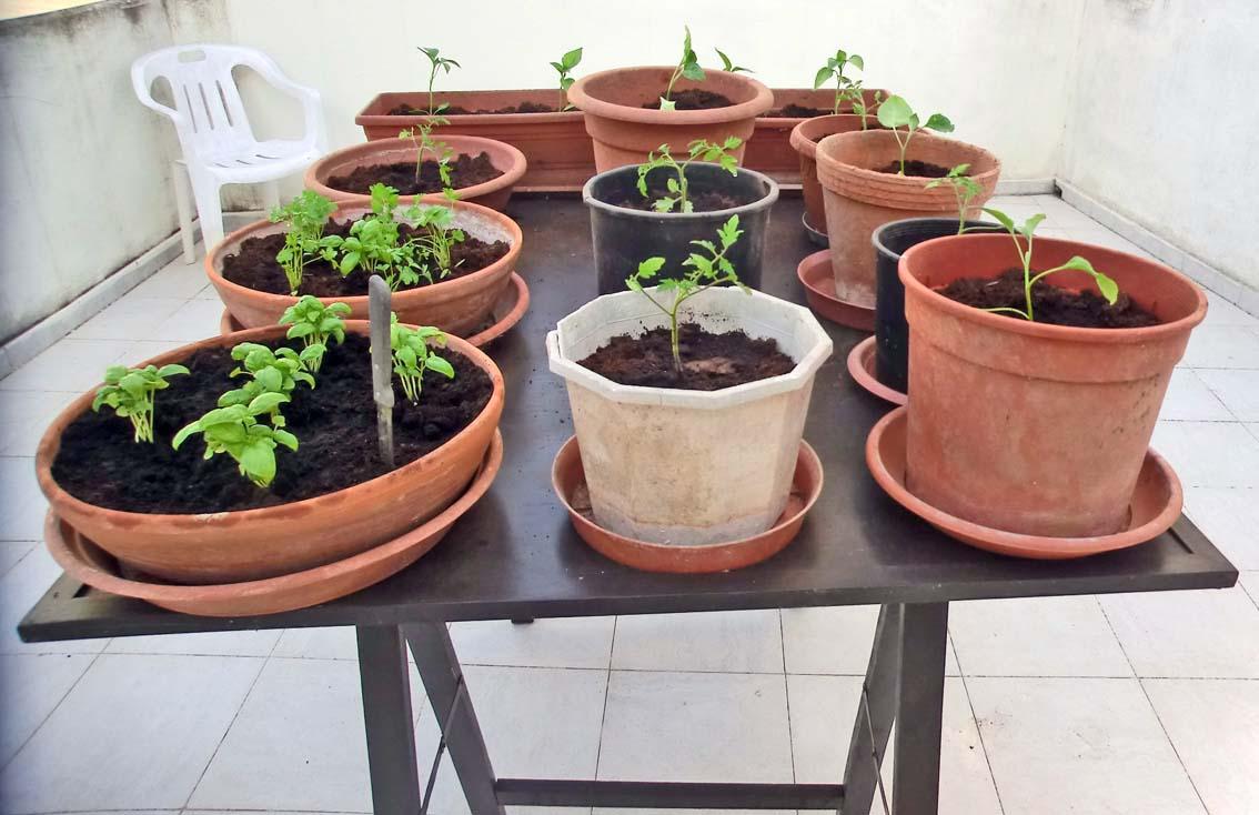 Giardino e Campagna: L\'orto sulla terrazza