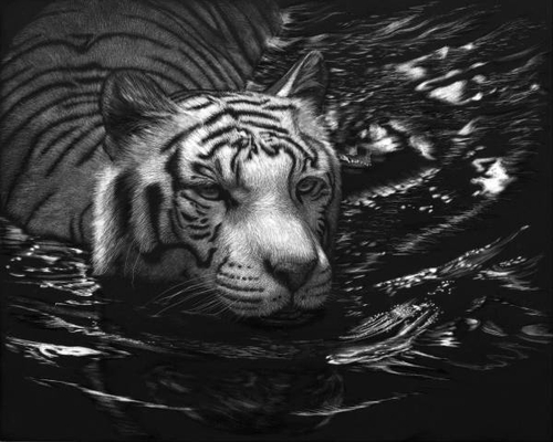 13-Moonlight-Swim-Tiger-Lorna-Hannett-Animals-Drawings-Scratched-out-of-Ink-with-the-Scratchboard-www-designstack-co
