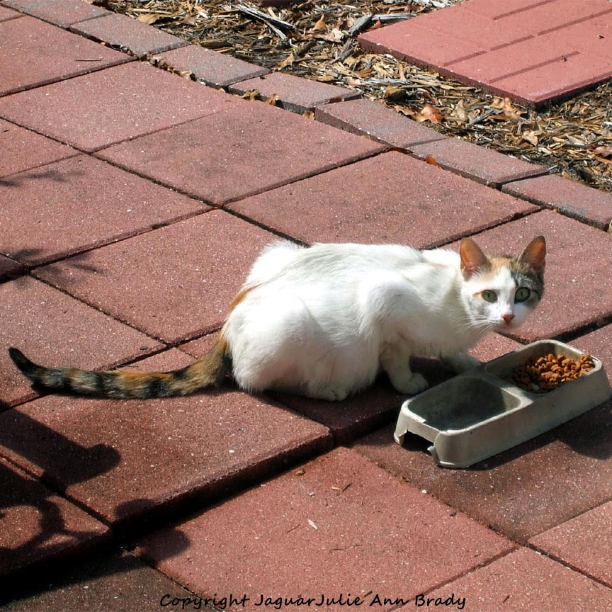 Pregnant White Mommy Cat in Mandarin Florida
