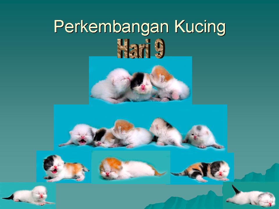 Perkembangan Bayi Kucing dalam bentuk gambar Sukses