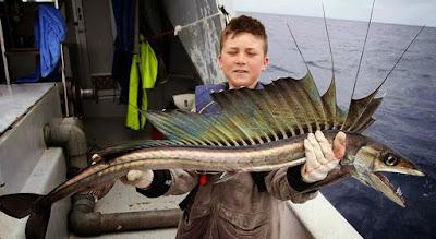 Peixes bizarros encontrados no Mar