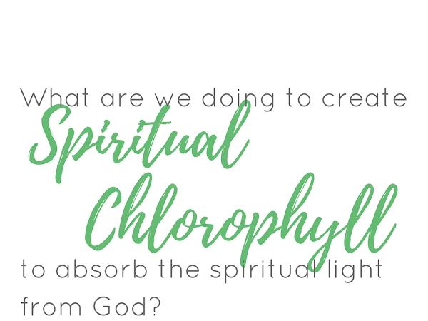 Spiritual Chlorophyll