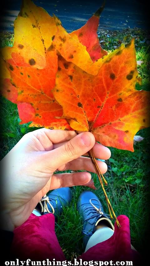 Nature Pics- Autumn in Staunton, VA!