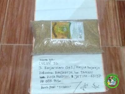 Benih pesanan  LULUK Sb Madiun, Jatim  (Sebelum Packing)