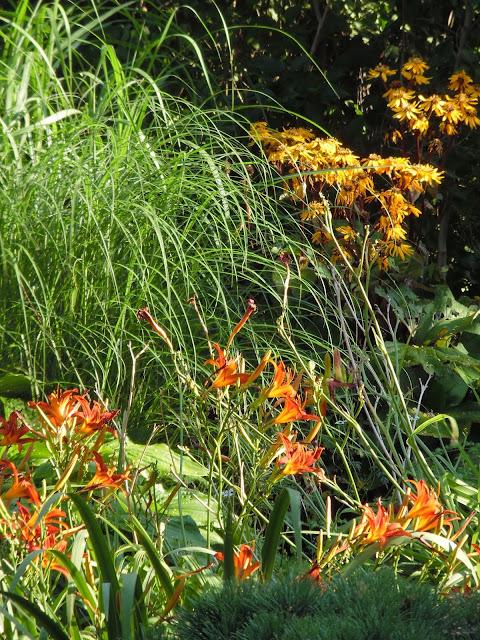 liliowce, miskanty i języczka pomarańczowa