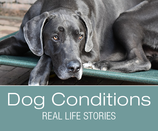 Dog Conditions - Real-Life Stories: Duke's Bloody Vomiting and Diarrhea