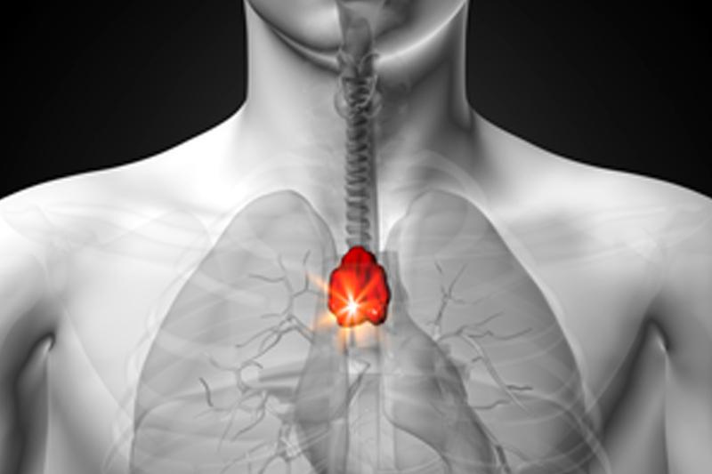 El timo: la llave de la energía vital   Acupuntura y Medicina ...