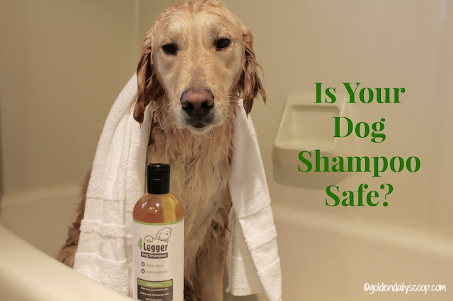 dog health, natural and organic dog shampoo, 4 Legger review and giveaway
