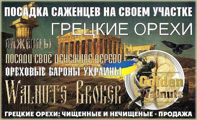 Продажа грецких орехов в Украине, Купить чищенный грецкий орех в Украине