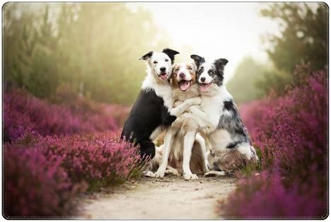 campo florido, predominando o rosa das flores, três  cachorros, se abraçando com carinho.