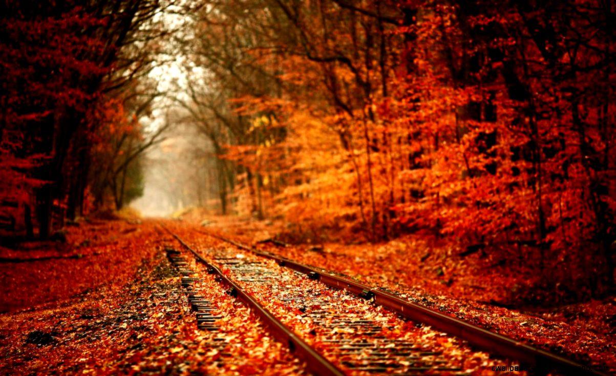 Autumn Background Tumblr
