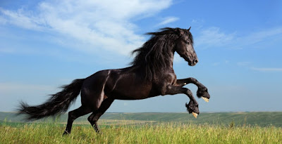 Keutamaan Memelihara Kuda