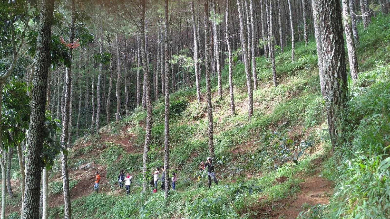 Peserta Tracking Hutan Pinus Tahura Juanda Bandung