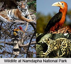 Namdapha National Park