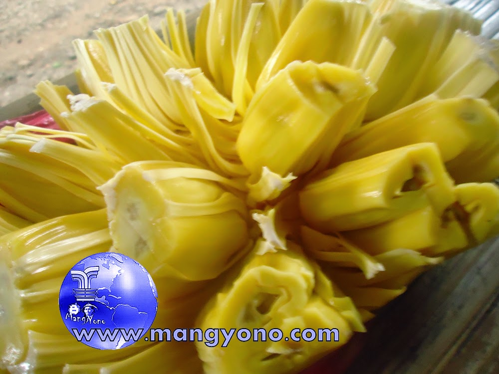 Nangka or Jackfruit