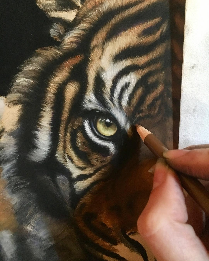 08-Tiger-Eye-Tatjana-Bril-Domestic-and-Wild-Animal-Drawings-www-designstack-co