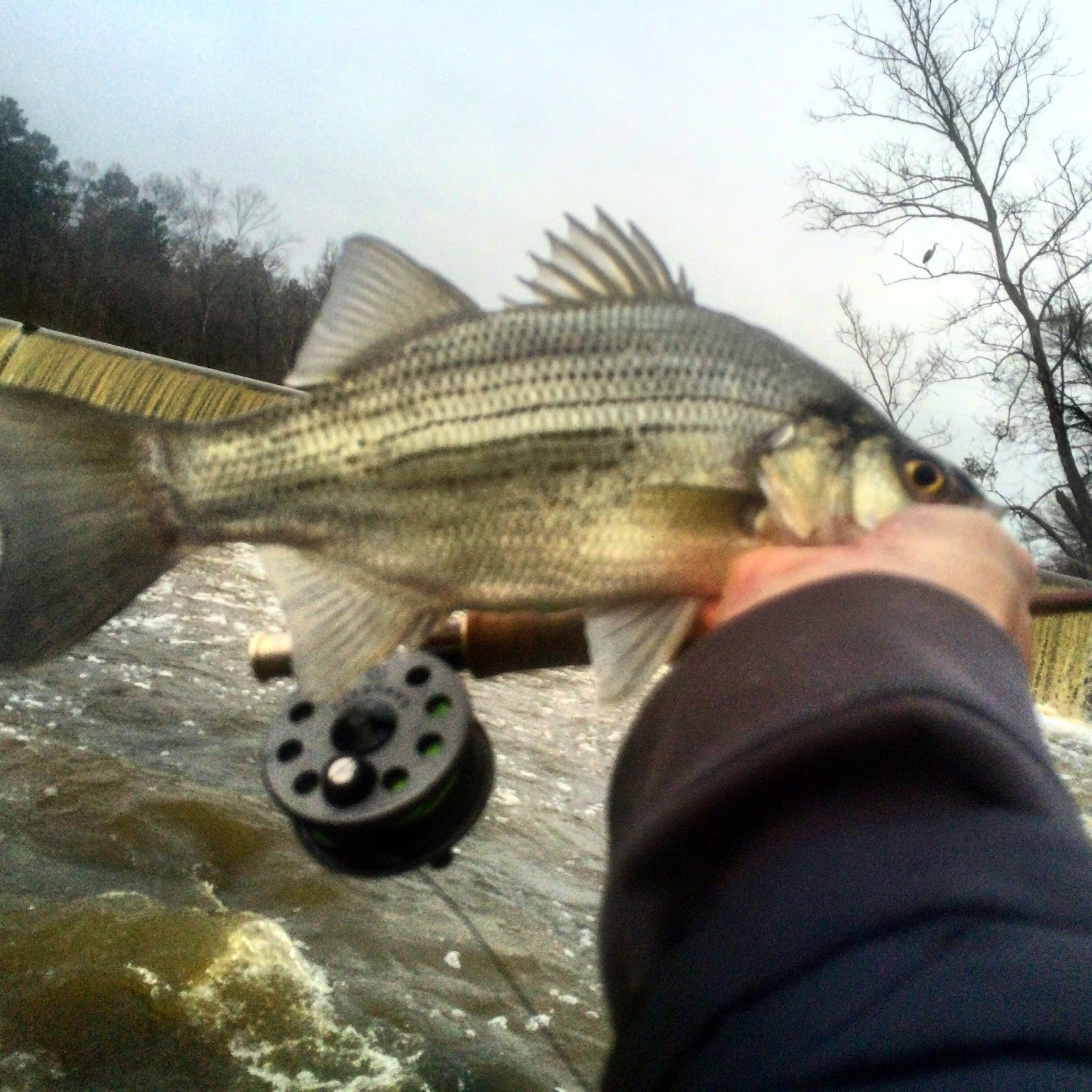 Raleigh Flyfishing Guide Service Fishing Is Great Right Now