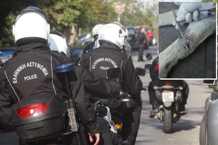 Απίστευτο περιστατικό: Αστυνομικός της ΔΙΑΣ πυροβόλησε σκύλο γιατί του… γάβγισε (φωτό)