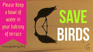 Save Birds :: keep a bowl of water for birds in summer