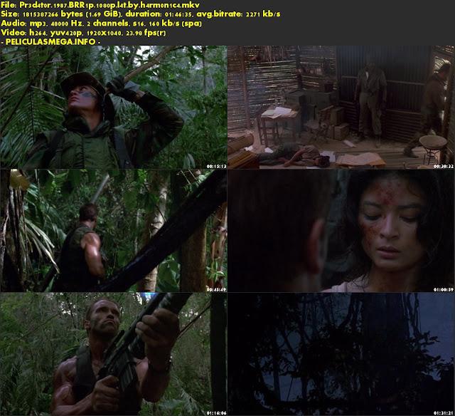 Descargar Depredador Latino por MEGA.