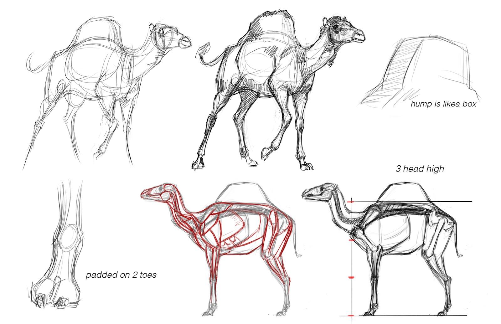Concept Design Academy Animal Anatomy With Jonathan Kuo