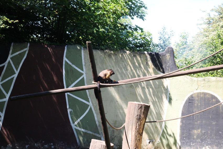 bellewaerde-parc-attraction-belgique-chimpanze