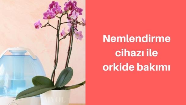 Orkide bakımında nemlendirme cihazı kullanımı