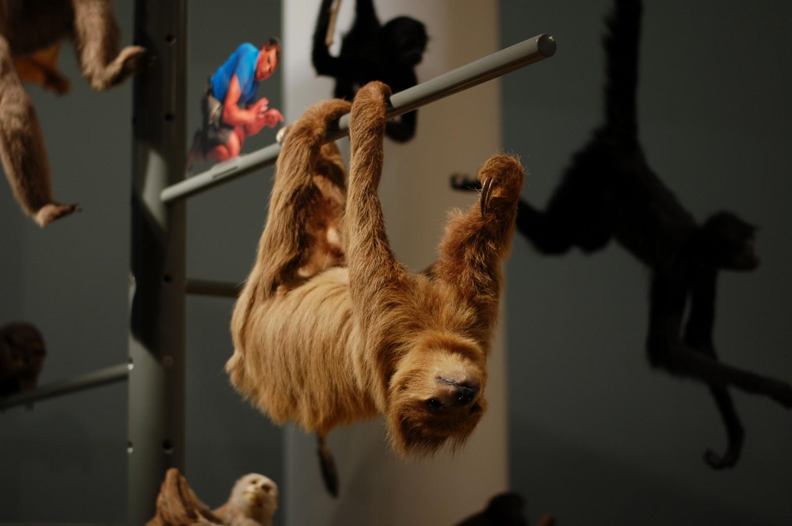 museu naturalis leiden holanda