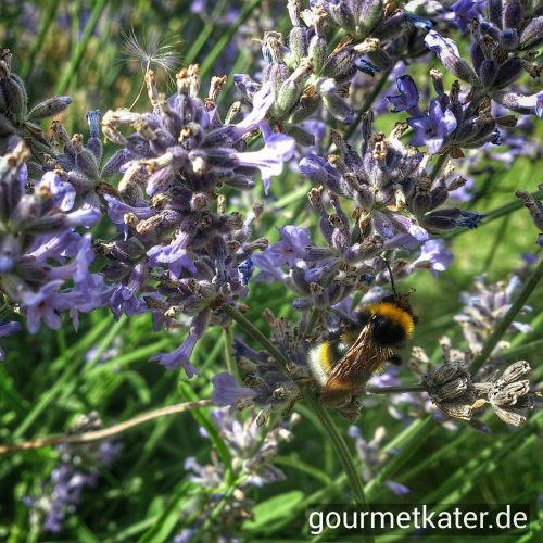 Rosmarin und Biene