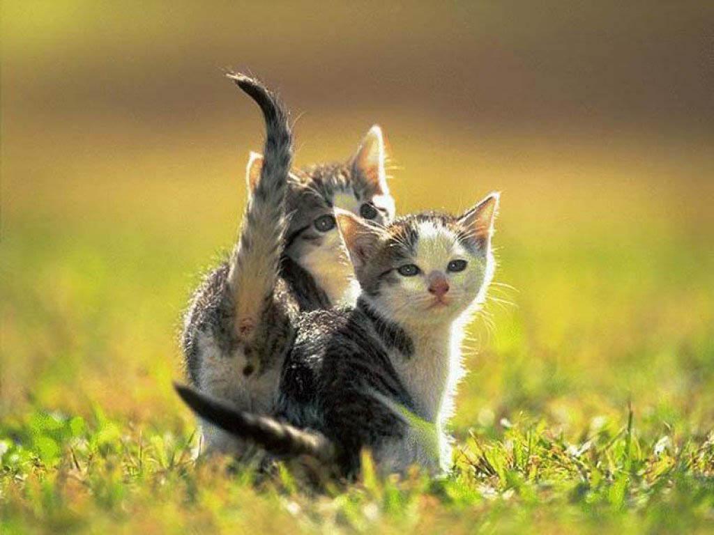 Cute kittens wallpapers wallpapers - Cute kitten backgrounds for desktop ...