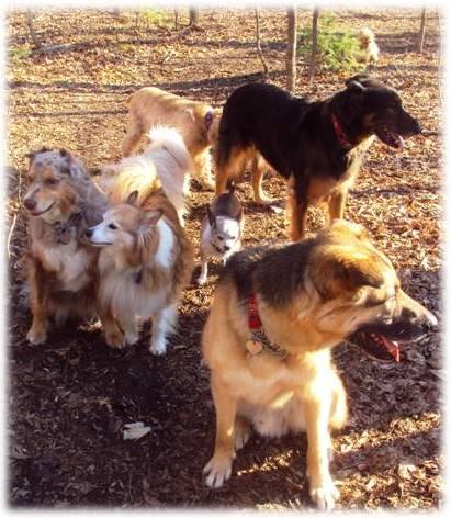 Ottawa Valley Dog Whisperer Home Made Diy Dog Cat Food Recipes