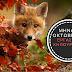 Εργασίες Κηπουρικής, μήνας Οκτώβριος