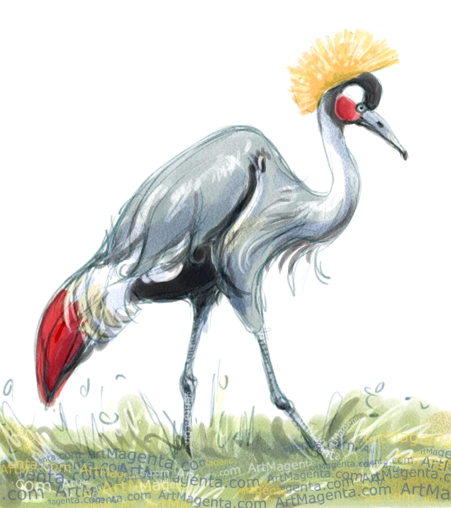 Black crowned crane sketch painting. Bird art drawing by illustrator Artmagenta
