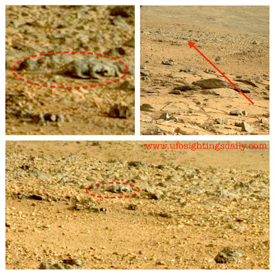 Alien Creature Caught In NASA Photo By Curiosity Rover, Lizard Or Rodent, May 2013.
