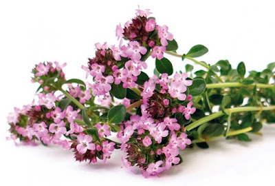 Thyme strengthens nerve and relives anxiety, calms the body and affects a good night's sleep