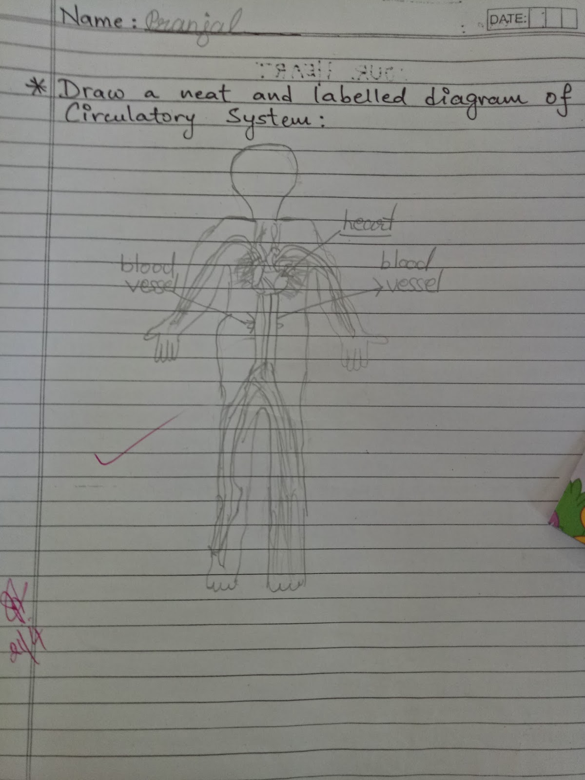 Pis Vadodara Std 4 Evs Ch Human Body Systems Practice