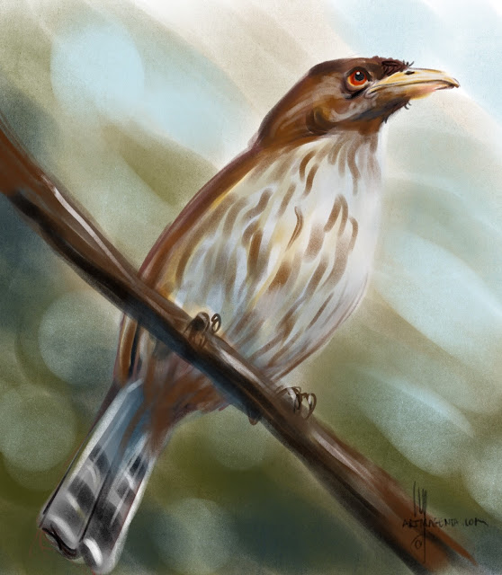 Palmchat bird painting by Artmagenta