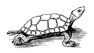 animal turtle image download illustration