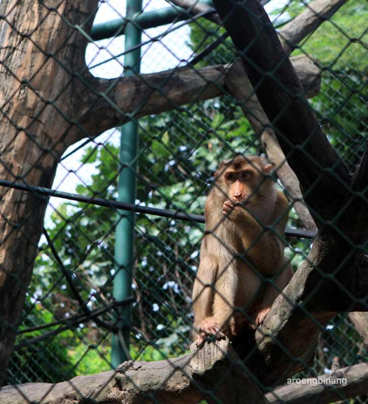 monyet kebun binatang ragunan jakarta