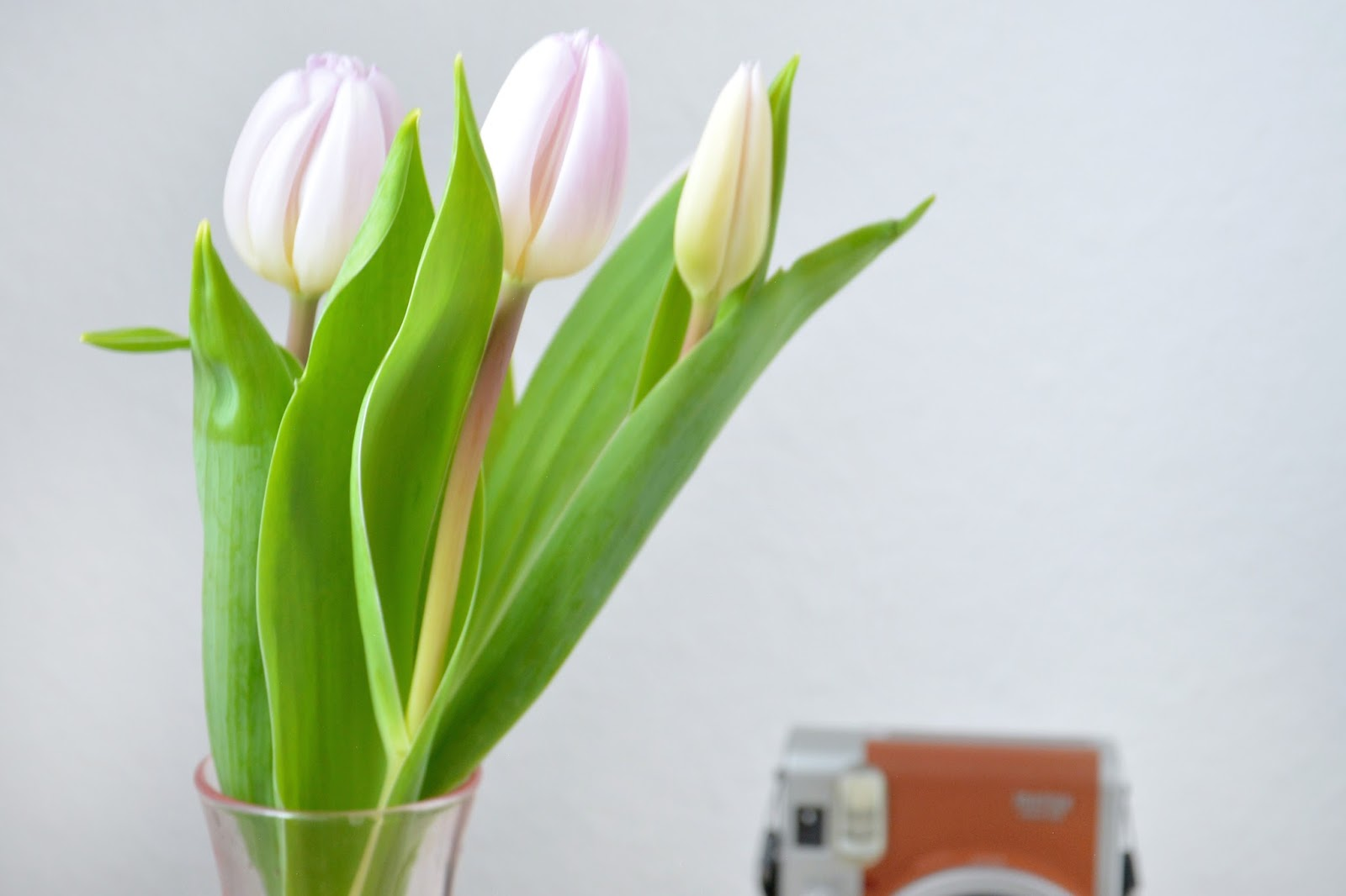 Instax Mini 90s Retro Brown; Fresh Tulips; Primark Pink Vase