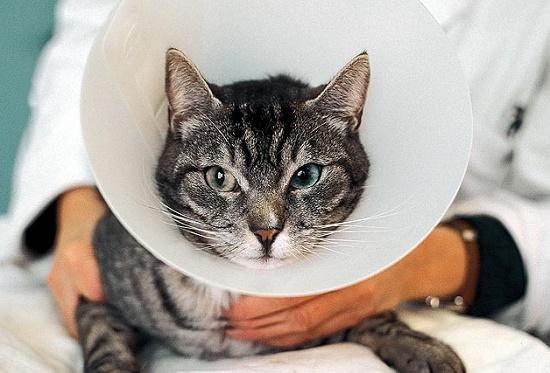 Cara Mudah Mengatasi Alergi Pada Kucing