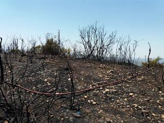 Ηλεία: Πυρκαγιά σε δασική έκταση στα Διάσελλα